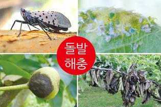 월동기 온도상승 '해충 생존율' 역대 최고, 살충제시장 확대 예고