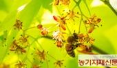 꿀벌 중독물질 검사대상 농약 8종에서 44종 확대