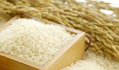 쌀 생산조정제 본격 가동 수급안정·타작물 자급률 제고 가능