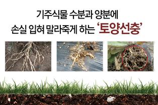 기주식물 수분과 양분에 손실 입혀 말라죽게 하는 '토양선충'