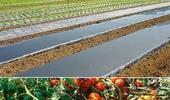 바스프의 농업용 멀칭필름 이코비오(ecovio®), 전 세계 최초 생분해성 유럽표준 인증 획득