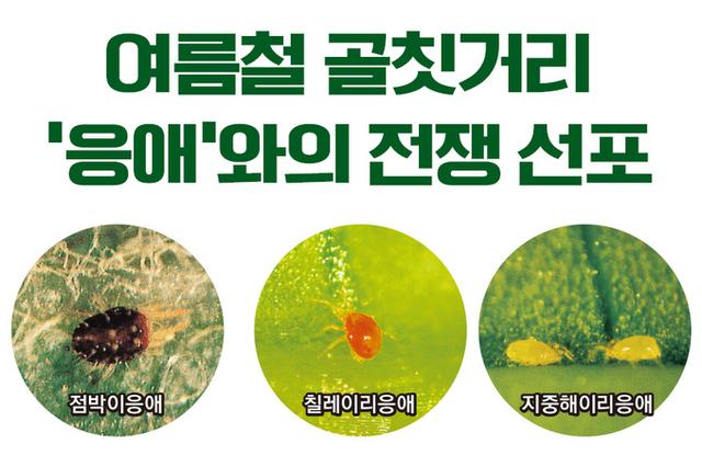 여름철 골칫거리 '응애'와의 전쟁 선포