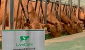 유라이크코리아, 국내 최초 블록체인 기반 한우 사육농장 개소
